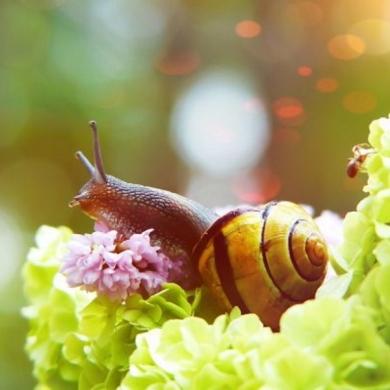 snail_2_2a7d6cb5.jpg